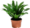 Potted Plant_DPAP