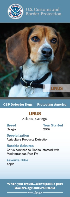 Meet Linus: Detector Dog